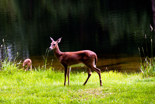 Mama and Fawn